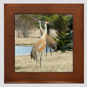 Sandhill Crane Framed Tile