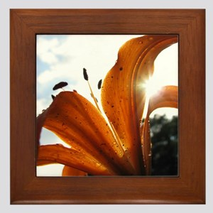 Colorful Lily In Sunlight Framed Tile