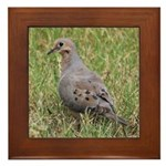 Mourning Dove Framed Tile