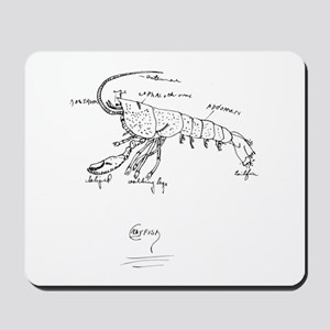 Crayfish Anatomy Class Mousepad
