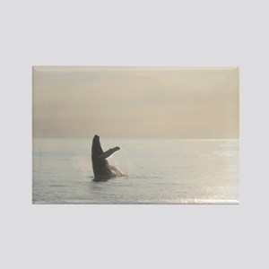 Rectangle Magnet-Whale (Humpback)