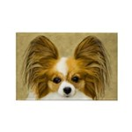 Papillon Rectangle Magnet (100 pack)