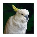 Sulphur crested Tile Coaster