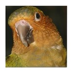 brownthroated conure Tile Coaster
