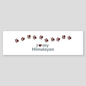 Himalayan Kitten Bumper Sticker