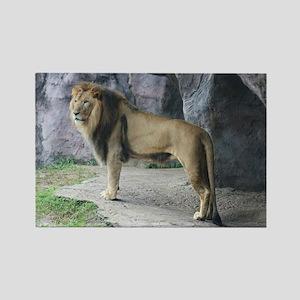 Rectangle Magnet-Lion