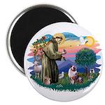 St Francis #2/ Aus Shep (merle) Magnet