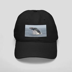 Black Cap-Whale (Humpback)