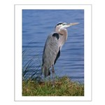 great blue heron Small Poster