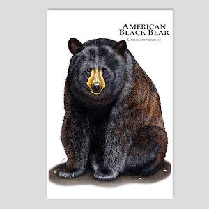 American Black Bear Postcards (Package of 8)