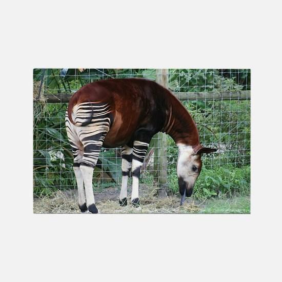 Rectangle Magnet-Okapi