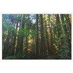 redwood forest + trees large borderless poster