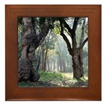 Trees of the Forest Framed Tile