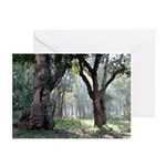 Trees of the Forest Greeting Cards (Pk of 10)
