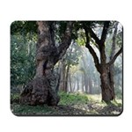 Trees of the Forest Mousepad