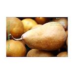 Bosc Pear Mini Poster Print