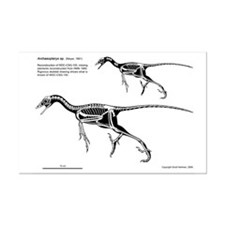 11 x 17 Archaeopteryx Skeletal Print