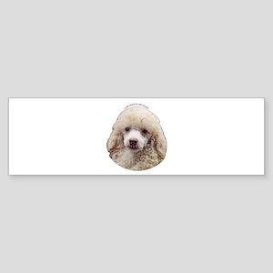 Miniature Poodle Bumper Sticker