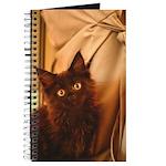 Maine Coon Kitten Journal