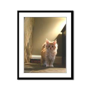 Maine Coon Kitten Framed Panel Print
