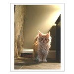 Small Maine Coon Kitten Poster