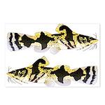 Piebald madtom catfish Postcards (Package of 8)