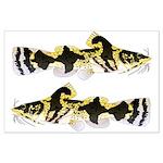 Piebald madtom catfish Posters