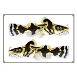 Piebald madtom catfish Banner