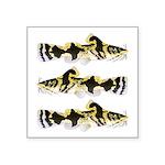 Piebald madtom catfish Sticker