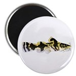 Piebald madtom catfish Magnets