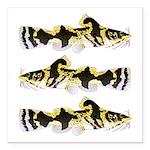 Piebald madtom catfish Square Car Magnet 3