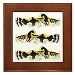 Piebald madtom catfish Framed Tile