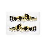 Piebald madtom catfish 4' x 6' Rug