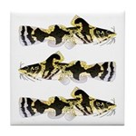 Piebald madtom catfish Tile Coaster