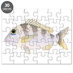 Jolthead Porgy Puzzle