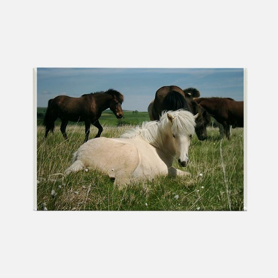 Cute Icelandic horse Rectangle Magnet