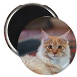 Maine Coon Magnet