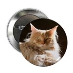 """Maine Coon 2.25"""" Button"""
