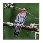 Red-bellied Woodpecker Tile Coaster