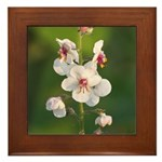 Moth Mullein Framed Tile