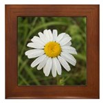 Ox Eye Daisy Framed Tile