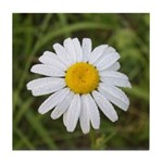 Ox Eye Daisy Tile Coaster