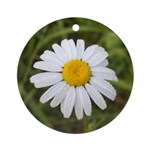 Ox Eye Daisy Ornament (Round)