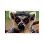Lemur Rectangle Magnet (10 pack)