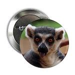 Lemur 2.25