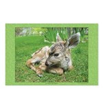 Baby Shanti Postcards (Package of 8)