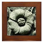 Stone Poppies Framed Tile
