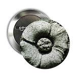 Stone Poppies 2.25