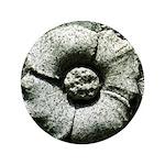 Stone Poppies 3.5