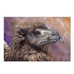 Camel Postcards (Package of 8)